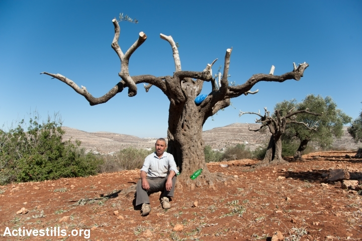 Palestinian farmers from the West Bank village of Qaryut assess the damage done to their olive trees the day before by Israeli settlers, October 20, 2013. Officials from the Palestinian Ministry of Agriculture on the scene counted 60 trees damaged belonging to 12 different farmers. (photo: Ryan Rodrick Beiler/Activestills.org)