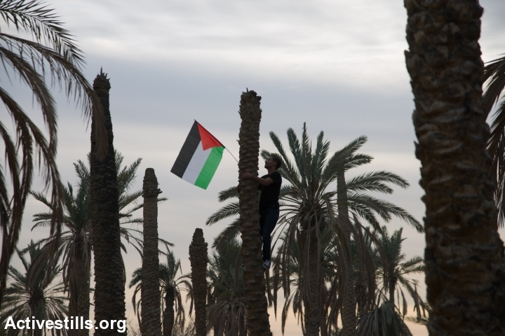 A Palestinian activist hangs the Palestinian flag on palm tree, in Ein Hijleh protest village, in the Jordan Valley, West Bank January 31, 2014.