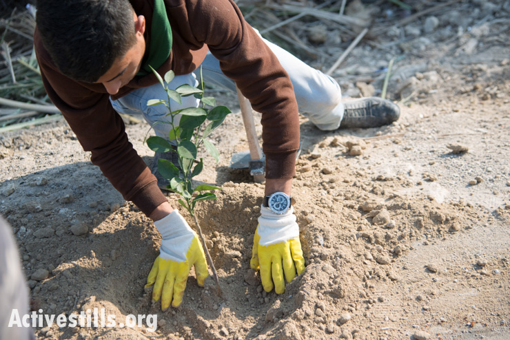 A Palestinian youth plant trees in the Jordan Valley protest village of Ein Hijleh, West Bank, February 6, 2014. (photo: Activestills.org)