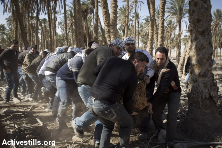 Palestinian activists clean parts of Ein Hijleh protest village, in the Jordan Valley, West Bank January 31, 2014. (Activestills.org)