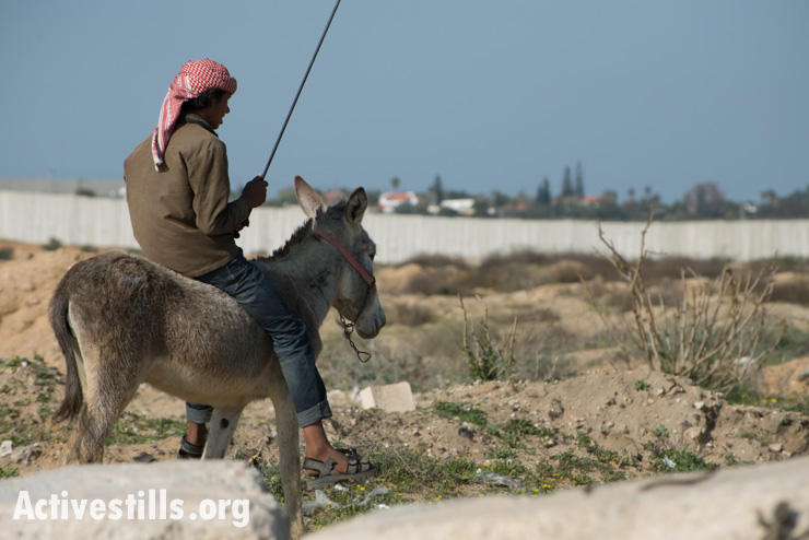 A Palestinian herder rides his donkey near the northern border between Gaza and Israel, Beit Hanoun, February 18, 2014. (photo: Ryan Rodrick Beiler/Activestills.org)
