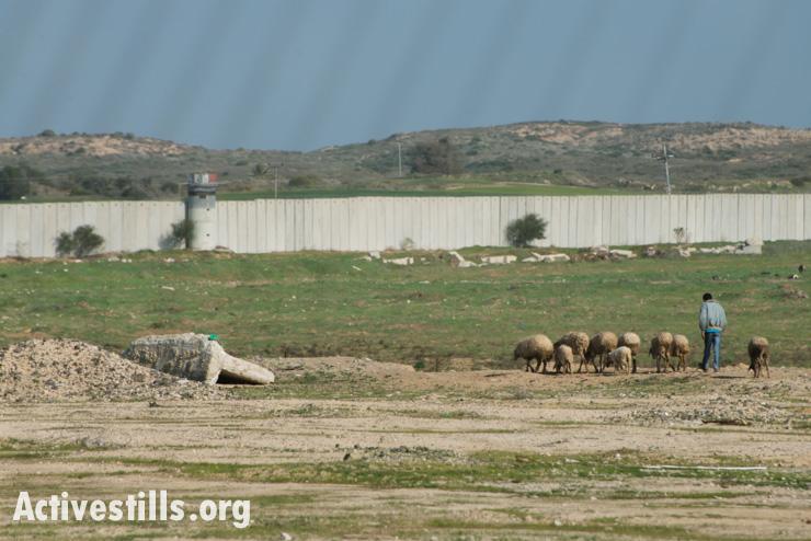 A Palestinian herder tends his sheep near the northern border between Gaza and Israel, Beit Hanoun, February 18, 2014. (photo: Ryan Rodrick Beiler/Activestills.org)
