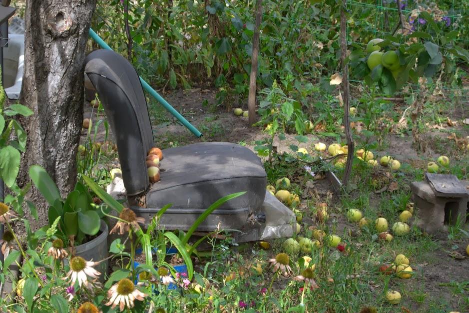 Apples strewn across the yard of our family friends' house. (photo: Osnat Ita Skoblinski)
