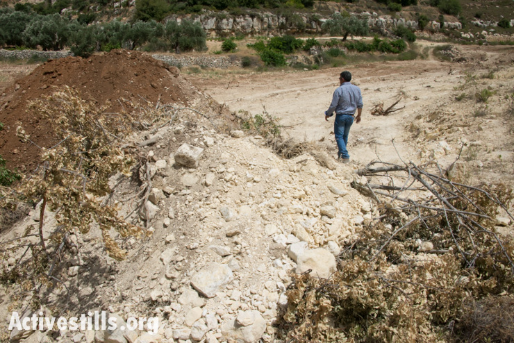 Daoud Nassar walks near a the branches of mature almond trees protruding from a mound of earth after Israeli authorities bulldozed his family's grove of some 1,500 fruit trees near the West Bank village of Nahalin, June 3, 2014.