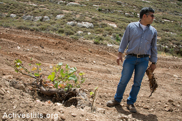 "Daoud Nassar inspects a mature grape vine destroyed when Israeli authorities bulldozed his family's grove of some 1,500 fruit trees near the West Bank village of Nahalin, June 3, 2014. On May 19, Israeli forces bulldozed the family's groves, which contained mature apricot, apple, grape, almond, and fig trees planted 10 years previous. The army claims that it is state land, but the Nassar family has documents proving ownership of their land, also known as ""Tent of Nations"" dating back to the Ottoman period. The family's land is virtually surrounded by the Gush Etzion settlement bloc which, like all settlements in the occupied Palestinian territories, is illegal under international law. Daoud Nassar inspects a mature grape vine destroyed when Israeli authorities bulldozed his family's grove of some 1,500 fruit trees near the West Bank village of Nahalin, June 3, 2014. On May 19, Israeli forces bulldozed the family's groves, which contained mature apricot, apple, grape, almond, and fig trees planted 10 years previous. The army claims that it is state land, but the Nassar family has documents proving ownership of their land, also known as ""Tent of Nations"" dating back to the Ottoman period. The family's land is virtually surrounded by the Gush Etzion settlement bloc which, like all settlements in the occupied Palestinian territories, is illegal under international law."
