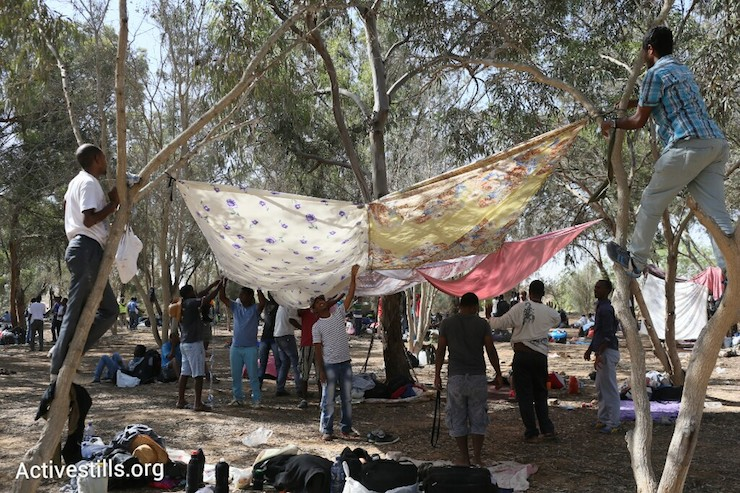 African asylum seekers build shelters from the sun at a small forest a few hundred meters from the Egyptian border where they slept the night, June 28, 2014. More than 800 Asylum seekers walked out of the Holot open detention facility and tried to reach the border fence with Egypt, saying Israeli dose not check their asylum request and therefore they asking for intervention from the UN and Red Cross as well as to leave the country. (Photo by Oren Ziv/Activestills.org)