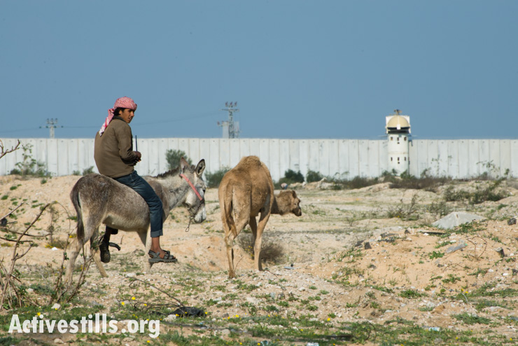 A Palestinian rides his donkey near the northern border between Gaza and Israel, Beit Hanoun, February 18, 2014.