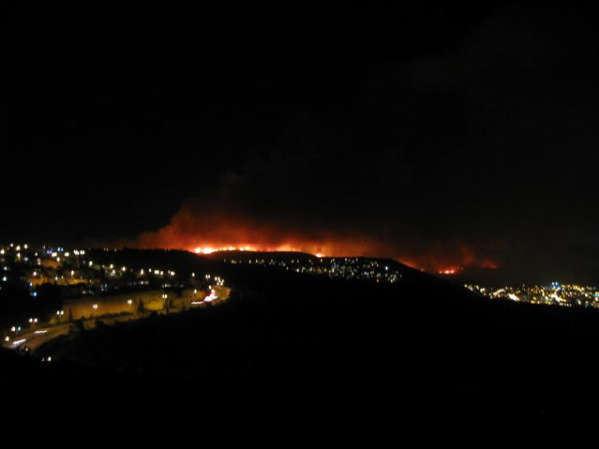 The Carmel disaster: My forest is on fire