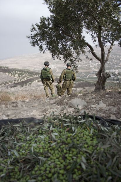Israeli soldiers standing under a Palestinian olive tree (photo: David Shaw/Alternative Information Center)