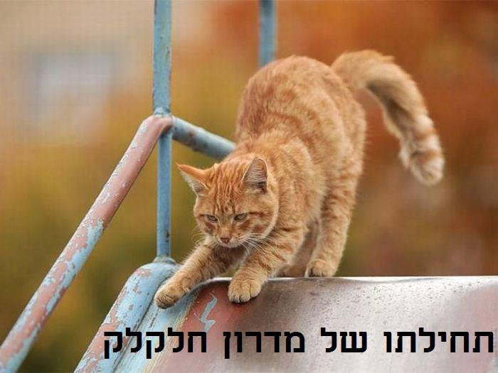 The beginning of a slippery slope (Itamar Shaltiel)