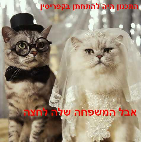 The plan was to have a civil marriage in Cyprus, but her family put on the pressure to go Jewish (Dor Zach)