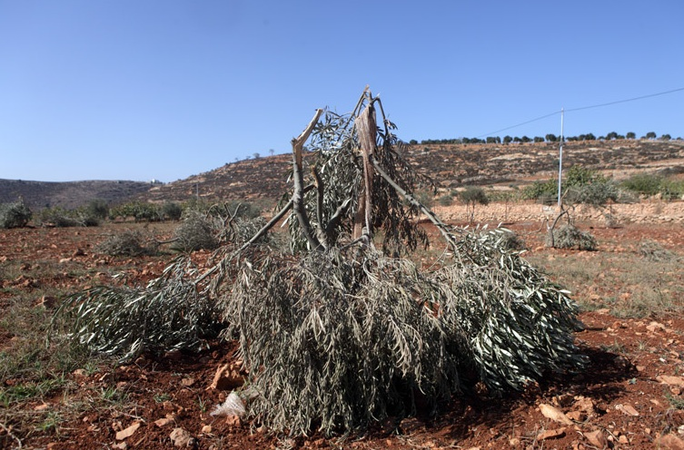 Settlers attack Palestinians, property in weekend of violence