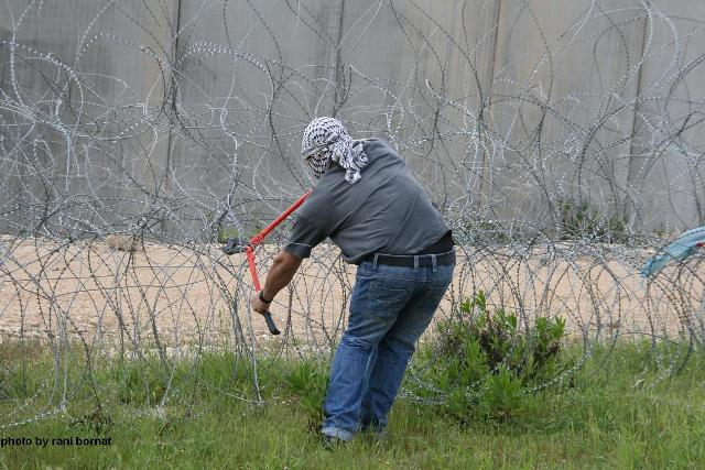 Palestinian cutting a fence in Bil'in (Rani Bornat)