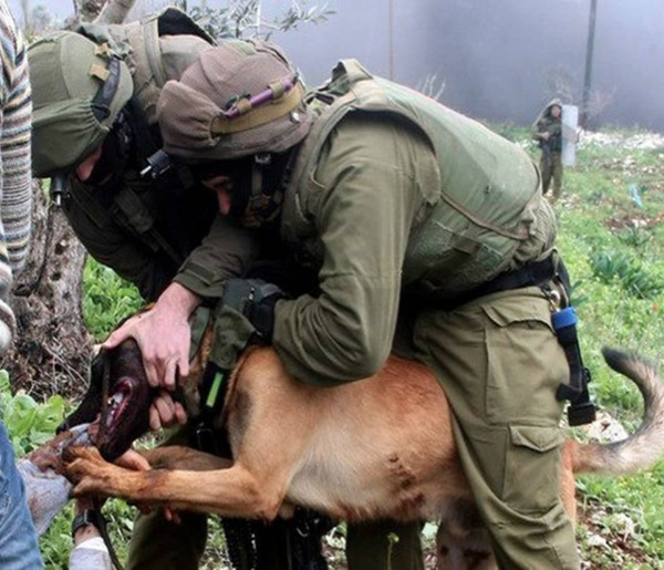 IDF soldiers release attack dog on unarmed Palestinian protesters