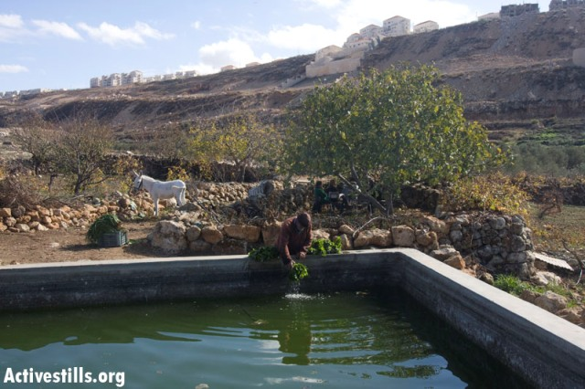 A farmer and a natural spring in Wadi Fukin. Background: Betar Illit (Oren Ziv / Activestills)
