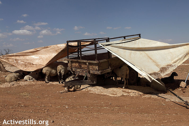 Palestinians use makeshift equipment to create shade for their sheep after animal shelters were demolished earlier the same day by the Israeli army, in the village of Susiya, South Hebron Hills, August 28, 2012.(photo: Anne Paq/Activestills.org)