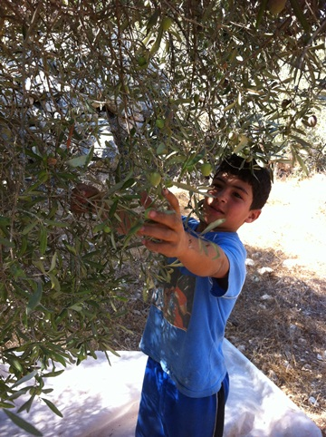 WATCH: IDF fires tear gas at olive harvesters in West Bank