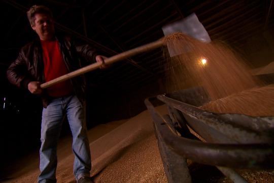 Ukrainian farmer Oleksandr Chubuk shoveling wheat grains in a Zgurivka warehouse, Oct 23, 2012 (Photo: DS)