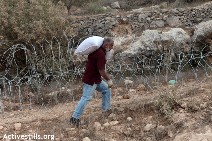 Members of the Atrash family carry olives after they harvested on lands located on the other side of the route of the Israeli separation wall, in the West Bank village of Al Walaja, October 27, 2012. The family owns more than four dunams in the valley of Al Walaja. Since the Israeli authorities closed off some access roads, the family can only get to their land by walking through the mountains and going through a gap in the wall. However, once the wall is completed it will surround Al Walaja and in all probability, cut off access to their land. (photo by: Anne Paq/Activestills.org)