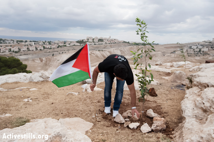 Palestinian activists commemorate Nakba Day by planting trees in the Ahfad Younis neighborhood of Bab Al-Shams protest village site in E1, May 15, 2013. The Israeli settlement Maale Adumim, illegal under international law, covers a nearby hilltop. (Photo by: Ryan Rodrick Beiler/Activestills.org)