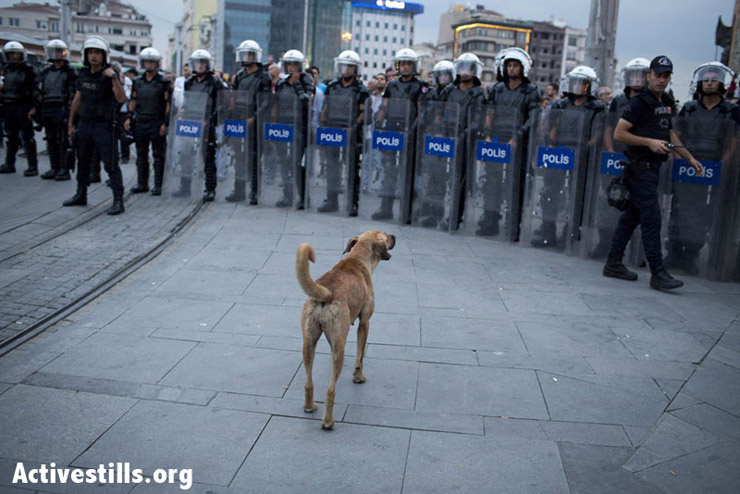 A street dog barking at anti riot policemen, as they block Taksim Square. Photo by: Oren Ziv/Activestills.org