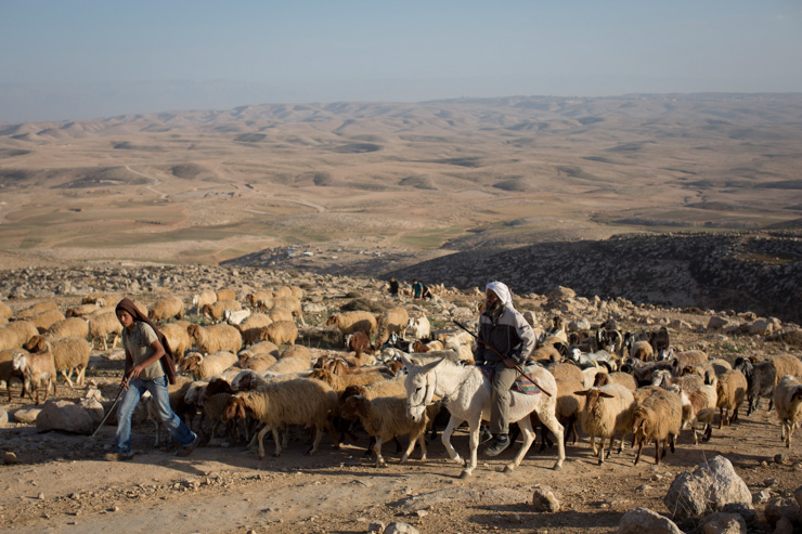 Shepherds lead their flocks near the West Bank village of Jinba. (photo: Oren Ziv/Activestills.org)