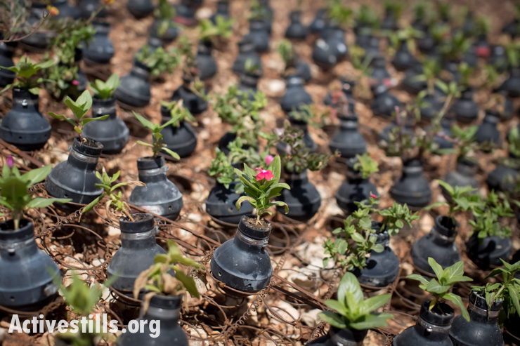 Flowers planted in used tear gas canisters on the sport where Bassem Abu Rahmah was shot and killed with a tear gas grenade fired by Israeli soldiers during a protest against the wall on 2009, in West Bank village of Bil'in, October 4, 2013. (photo: Oren Ziv/Activestills.org)