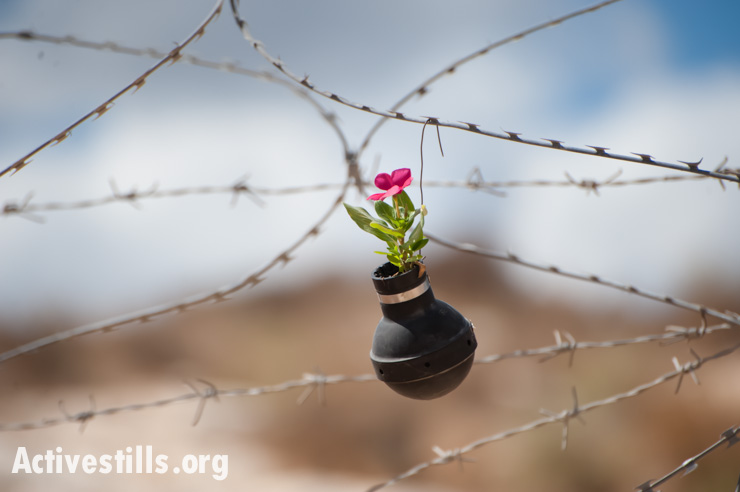 A flower growing from a tear gas grenade hangs from razor wire near a memorial garden on the spot where, in a 2009 demonstration in the West Bank village of Bil'in, Bassem Abu Rahmah was shot and killed with a high-velocity tear gas grenade fired by Israeli soldiers, Bil'in, West Bank, October 4, 2013. (photo: Ryan Rodrick Beiler/Activestills.org)