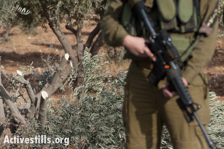 PHOTOS: A state-sanctioned 'price tag' on Palestinian olive trees