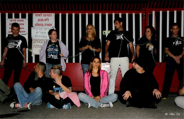 Soglowek slaughter house entrance blocked by activists. Three were arrested (Hila Oz)