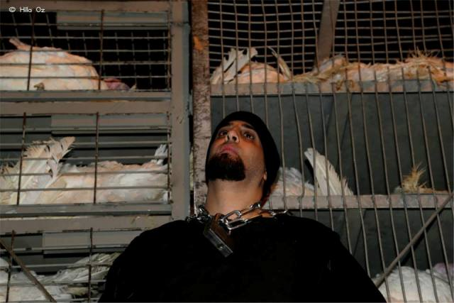 A man chained to a truck filled with caged chickens at Soglowek slaughter house (Hila Oz)
