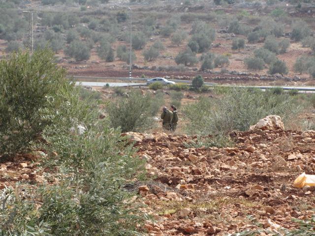 PHOTOS: Hundreds of olive trees destroyed near West Bank village