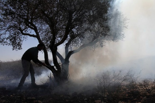 The silent axe: Driving Palestinian olive farmers off their land