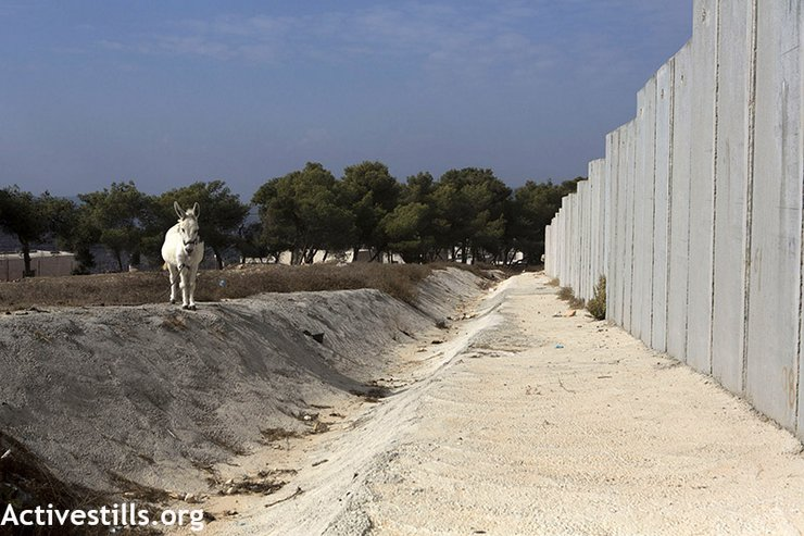 The Israeli separation wall in the Palestinian village of Al Walaja. (photo: Anne Paq/Activestills.org)
