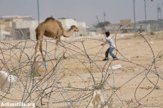A Bedouin child leading a camel is seen behind barb wire placed to separate the unrecognized Bedouin village of Amra-Tarabin from the Jewish village of Omer (seen in the background), May 22, 2009. (Photo: Oren Ziv/ Activestills.org)