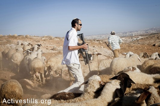 A Jewish settler from the illegal settlement of Mitzpe Yair chases a flock and threatens shepherds of Gwawis. He is holding an M16 rifle, issued to him by the Israeli army as part of his paid job as a security coordinator. The law states that he is not allowed to take any action outside the settlement's borders, September 18, 2012. (photo: Shiraz Grinbaum/Activestills.org)