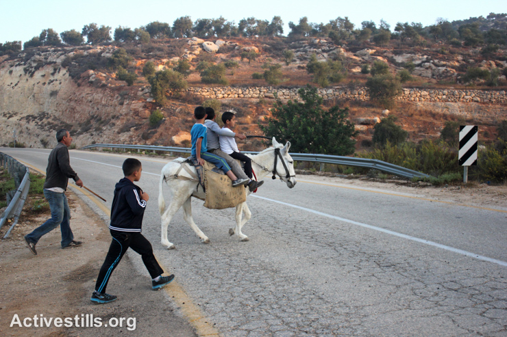 A Palestinian family crosses an Israeli bypass road as they head towards their lands for the olive harvest, in Salem village, West Bank, October 8, 2014. Farmers who have groves behind this Israeli bypass road are allowed to enter their lands twice a year: once during olive harvest season and again for tilling soil in April.
