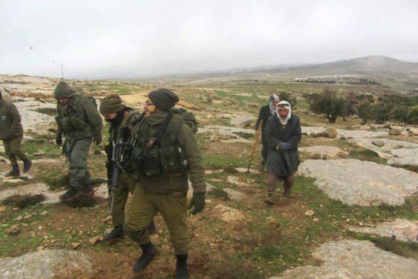 Israeli soldiers and Palestinian villagers inspect damage to olive trees in the south Hebron hills, January 9, 2015. (Photo by Lanser Nawajeh/B'Tselem)