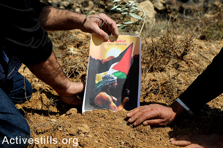 Palestinian activists plant olive trees and hang Vittorio Arrigoni's photo in Qaryut village.  Arrigoni, and Italian solidarity activist, was killed in Gaza in 2010 by extremists for unknown reasons.  (photo: Activestills.org)