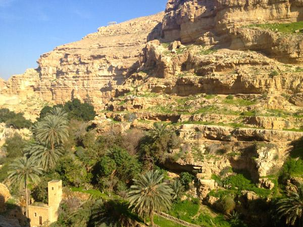 Vegetation in Wadi Qelt, Jordan Valley, West Bank. (Photo: Angela Gruber)