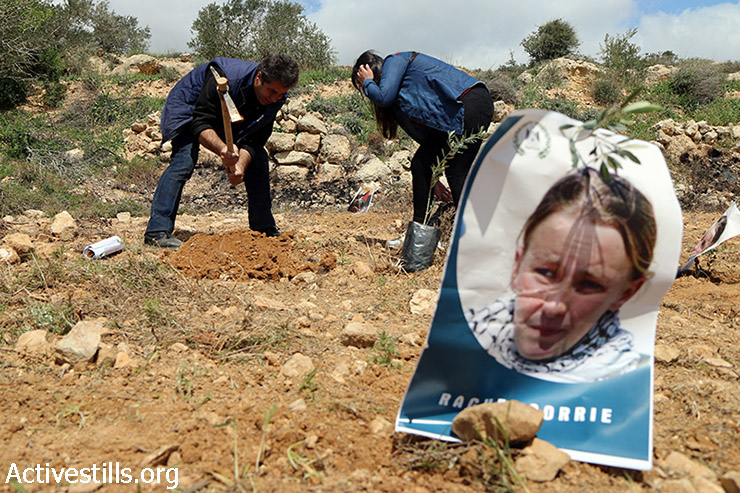 Palestinian activists plant olive trees and hang Rachel Corrie's photo during an olive tree planting activity commemorating her death, Qariyut, West Bank, March 15, 2015. Corrie was an American activist who was crushed to death by an Israeli military bulldozer in 2003, as she tried to block the demolition of a Palestinian home in Rafah area, Gaza Strip. Two Palestinians were arrested during the activity by Israeli forces.  (photo: Activestills.org)
