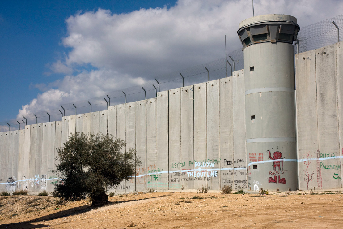 An olive tree in front of the Israeli separation barrier in Bethlehem. (Activestills.org)