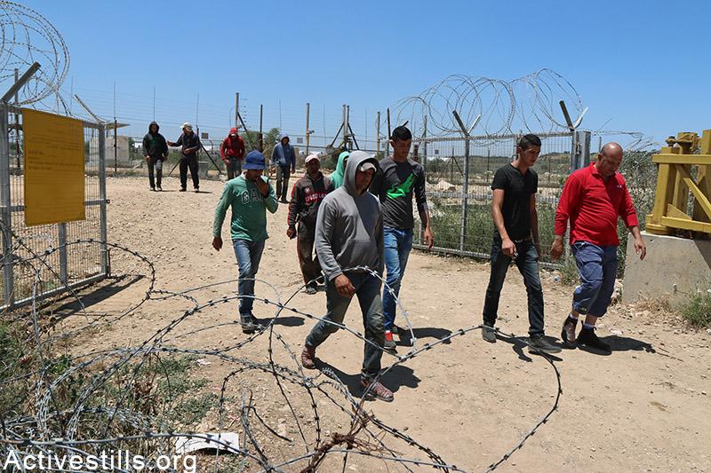 Palestinian farmers walking through an agricultural gate near Falamya village (gate 914), West Bank, May 17, 2015. Ahmad al-Bazz / Activestills.org