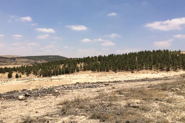 """The JNF-sponsored """"Yatir Forest"""" on a hill nearby to the village of Atir. (Photo by Amjad Iraqi)"""