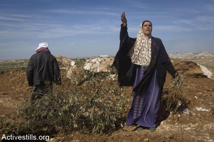 A woman from the West Bank village Susya is seen near olive trees that were cut down by settlers, south Hebron Hills, West Bank, February 22, 2011. (Oren Ziv/Activestills.org)