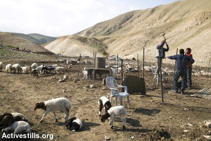 Palestinians build a temporary shelter for their animals following demolitions in Karzalya, Jordan Valley, West Bank, February 11, 2016. (photo: Activestills.org)