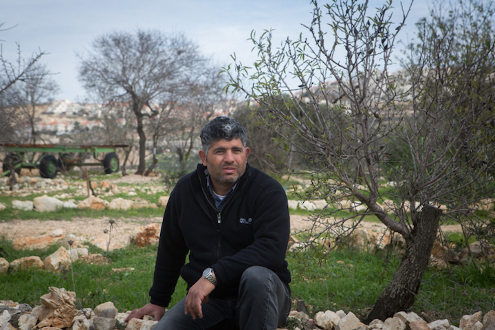 Daoud Nassar, the director of Tent of Nations, sits among olive trees on his family's land, West Bank. (File photo by Miriam Alster/Flash90)