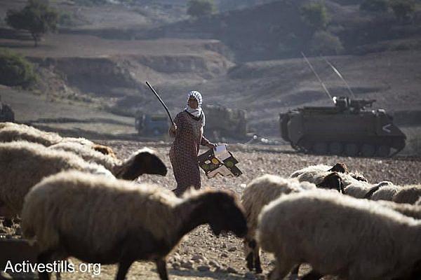 A Palestinian shepherd herds her sheep, behind her is parked an IDF armored personnel carrier, Jordan Valley, West Bank, December 8, 2016. (Keren Manor/Activestills.org)