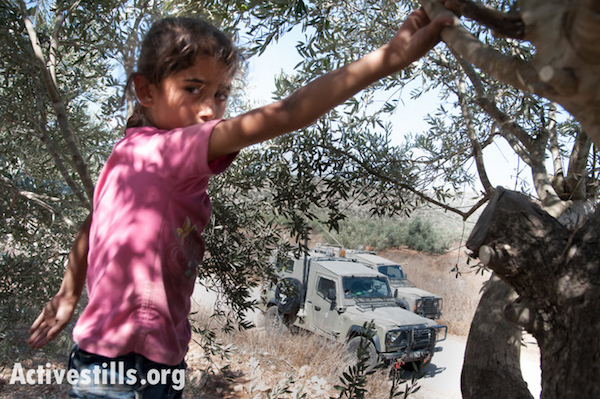 A girl from the West Bank town of Awarta harvests her family's olives in the midst of frequent patrols by the Israeli military, October 13, 2012. Because the Israeli settlement Itamar lies on a neaby hilltop, the residents of Awarta are forced to coordinate permission to harvest their olives from Israeli authorities.