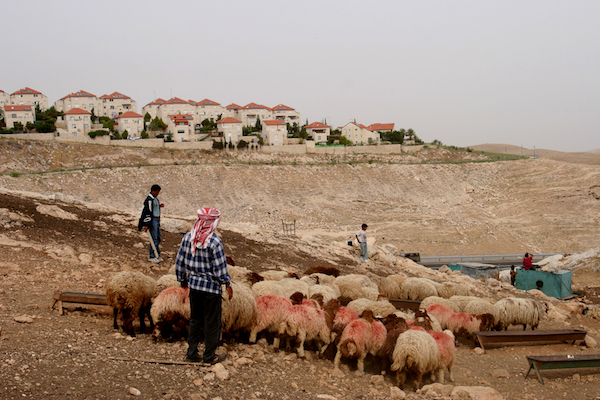 A man from the Jahalin tribe herds his sheep in his village near the Israeli settlement of Maale Adumin, West Bank, May 19, 2005. (Yaniv Nadav/Flash90)